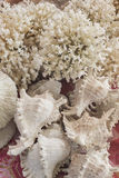 White coral and seashells souvenirs in market Royalty Free Stock Photography