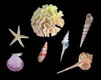 White Coral, Starfish, And Seashells On Black Royalty Free Stock Photos