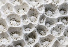 White coral texture macro photo. Dry sea coral structure closeup. Abstract macro background. Marine coral surface with structure elements for water filtration royalty free stock photos