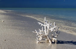White coral on a white sand beach. Royalty Free Stock Photos