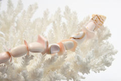 White corals on the white backing Stock Images