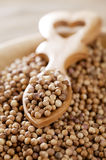 White coriander seeds  in wooden plate Royalty Free Stock Image