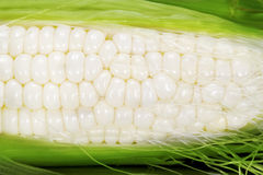 White Corn royalty free stock image