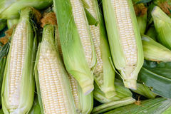 White corn. Fresh white corn for sale at the market Royalty Free Stock Images