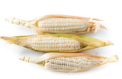 White corn  on white background Royalty Free Stock Images