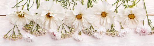 White cosmea cosmos flowers panoramic border, banner, wedding romantic background. Flat lay. Wide screen Web banner or flyer with copy space stock photo