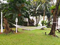 The white cot is tied between the tree and the white wooden stake in the garden, which planted various species on green grass. Se royalty free stock photography