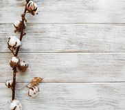 White cotton flowers. On rustic wooden table royalty free stock photo