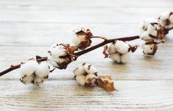 White cotton flowers. On rustic wooden table stock photo