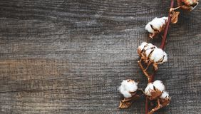 White cotton flowers. On rustic wooden table royalty free stock photography