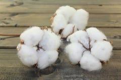 White cotton on a wood Stock Photo