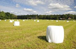 White covered bales of straw Royalty Free Stock Photos