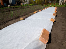 White covering materials spread out on the ground to protect the seedlings from the cold.  Royalty Free Stock Image
