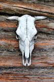 White Cow Skull Royalty Free Stock Photos