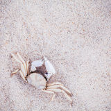 White Crab on beach sand for summer and beach concept. Studio sh Royalty Free Stock Images