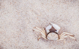 White Crab on beach sand for summer and beach concept. Studio sh Stock Photos