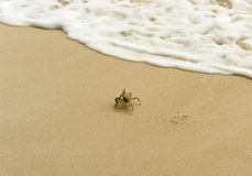 White crab escapes the sand by wave Royalty Free Stock Photography