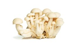 White Crab Mushrooms Stock Photography