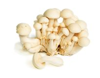 White Crab Mushrooms Stock Images