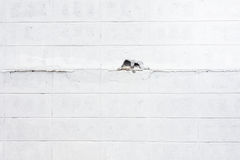 White crack concrete block texture background Royalty Free Stock Image