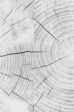 White cracked wooden pattern, background texture Royalty Free Stock Photos