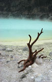 White Crater in Bandung, Indonesia. Tree branch by Kawah Putih (white crater), situated in South of Bandung, Indonesia. The color of the water is apple green Stock Images