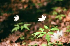White creatures of nature stock photography