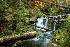 White creek Stock Photography