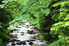 White creek Royalty Free Stock Image