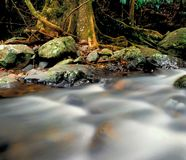 White creek water flowing. Cold clear mountain streamr rapids cascade over river rocks in a pristine untouched tropical rainforest. Moss and old growth trees and royalty free stock images