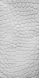 White crocodile leather texture Stock Photography