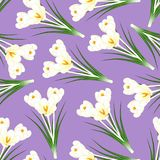 White Crocus Flower on Light Purple Background. Vector Illustration.  Stock Illustration