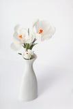 White crocus in vase Stock Photos