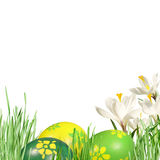 White crocuses and Easter eggs Royalty Free Stock Photography