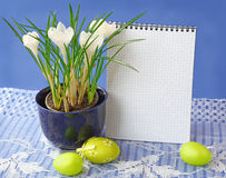 White crocuses and easters eggs Royalty Free Stock Image