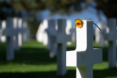 White cross with flower, Normandy American Cemetery, France stock image