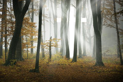 White cross of light appears in the forest Royalty Free Stock Image