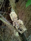 White Crumbling Wood. On a tree Stock Photography