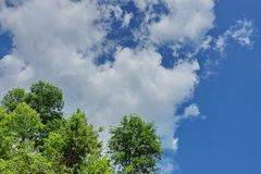 White Cumulus clouds on a blue sky background crown of green tre. White Cumulus clouds on a blue sky background, fluffy, fancy shape crown of green trees royalty free stock photography