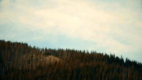 White cumulus clouds move fast over fir trees in mountains. In real time. Shot in Carpathian Mountains, Ukraine. There`s a tiny Ukrainian flag on the hill stock video
