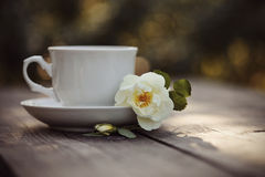 White cup and a branch of the wild rose Stock Photography