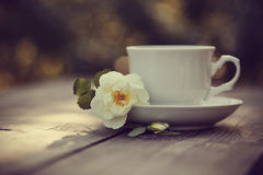 White cup and a branch of the wild rose Royalty Free Stock Image