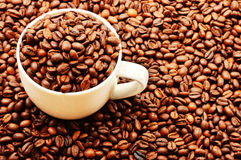 Composition with white cup and coffee beans Stock Image