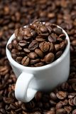 White cup in coffee beans, concept photo, vertical closeup. White cup in coffee beans, concept photo, closeup royalty free stock photo