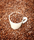 White cup in coffee beans Royalty Free Stock Images