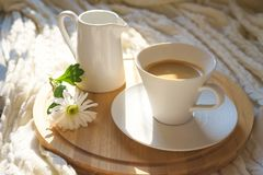 White cup of coffee with cozy knitted plaid on a wooden desk and with white flower. Top view on white cup of coffee with cozy knitted plaid on a round wooden royalty free stock images