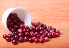 White cup with cranberries spilling out of it. Scattered from a white cup cranberries stock images