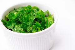 White cup of fresh mint leaves on white background Royalty Free Stock Images