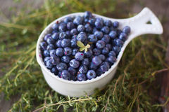 White cup full of blueberry forest Stock Photography