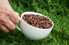 White cup full of coffee beans Stock Images